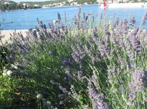 Croatia St Andrew Beach and so (19)